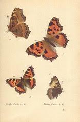 papillons d 1