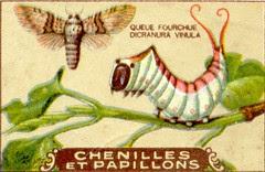 chenille 9