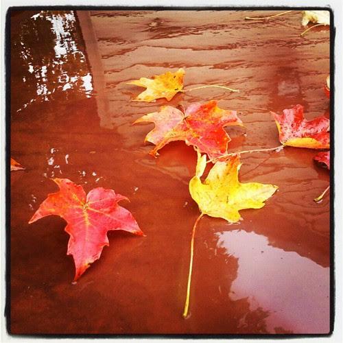 #rainyday #newhampshire #fall #foliage #leaves #leaf #rain