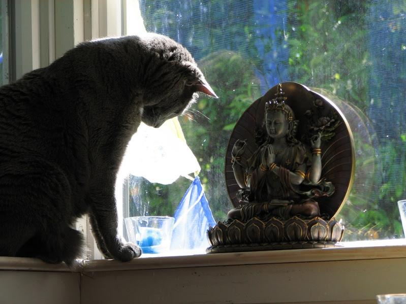 Кот поклоняется Будде. Необычное фото