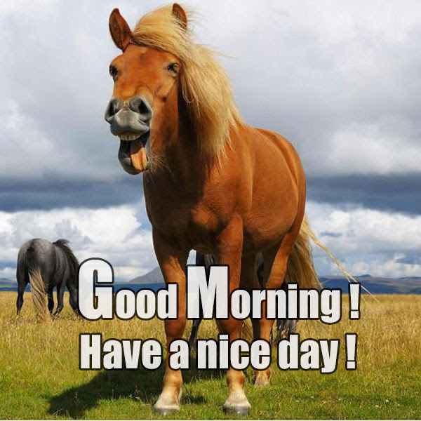 Funny Good Morning Have A Nice Day Greetings Picture Good Morning