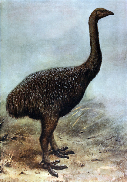 File:Megalapteryx.png