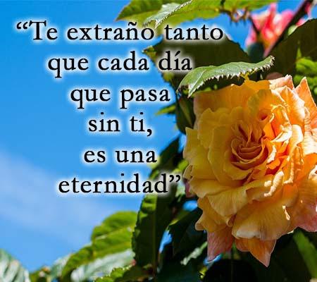 Imagenes De Rosas Con Frases De Te Extrano Rosas De Amor
