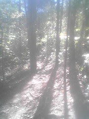 Bald Eagle Trail 2