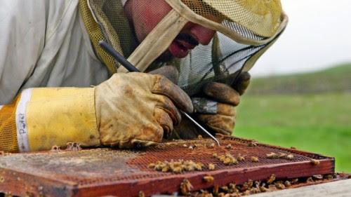 οι-επιστήμονες-ανακάλυψαν-τι-σκοτώνει-τις-μέλισσες