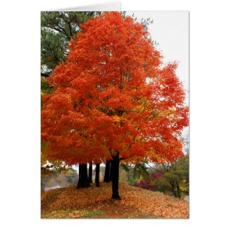 Beautiful Fall Notecard Greeting Card