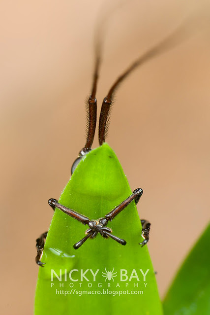 Longhorn Beetle (Cerambycidae) - DSC_6927