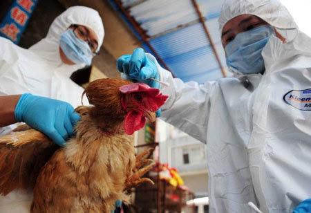 virus, H7N9, cúm gia cầm, kháng thuốc, Tamiflu