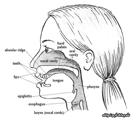 أفضل 10 طرق لعلاج مشاكل الأذن