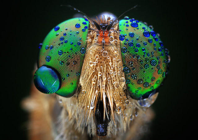 Magnificent Macro Photos of Insect Eyes by Shikhei Goh photography insects