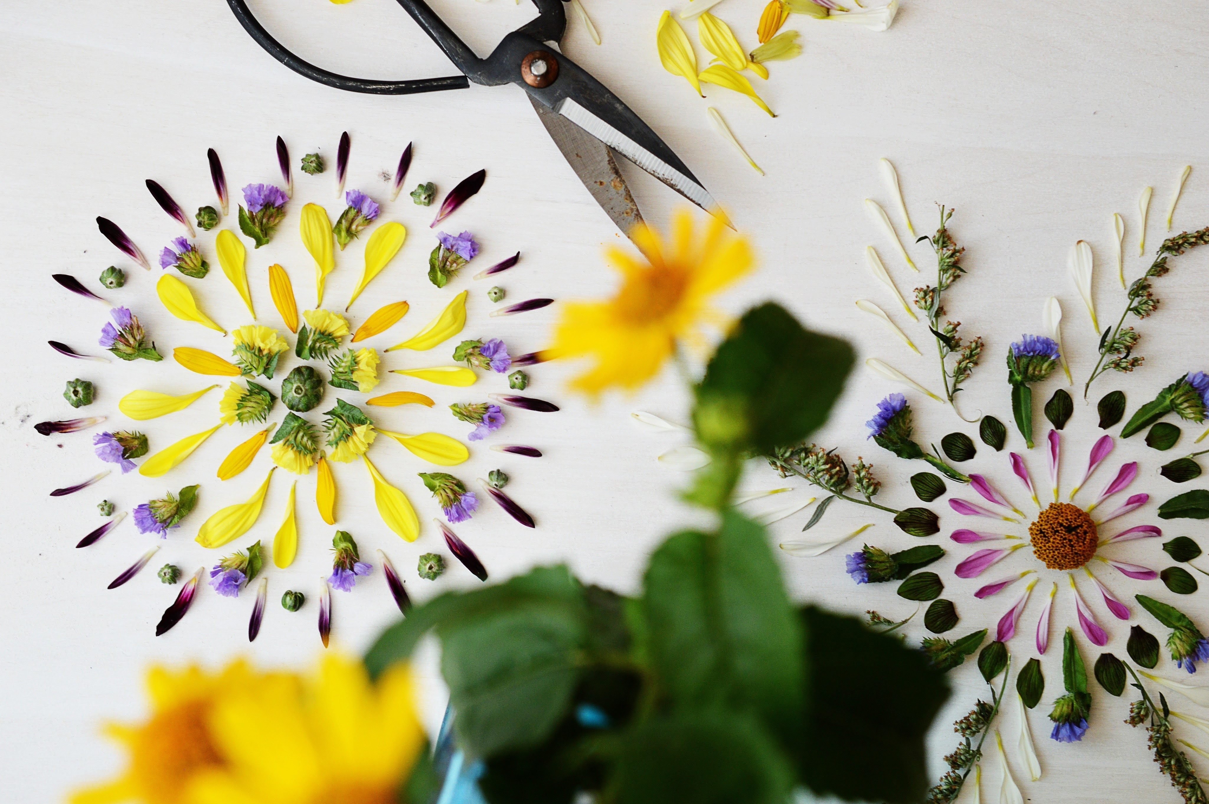 Nature Mandalas · How To Make A Piece Of Pressed Flower ...