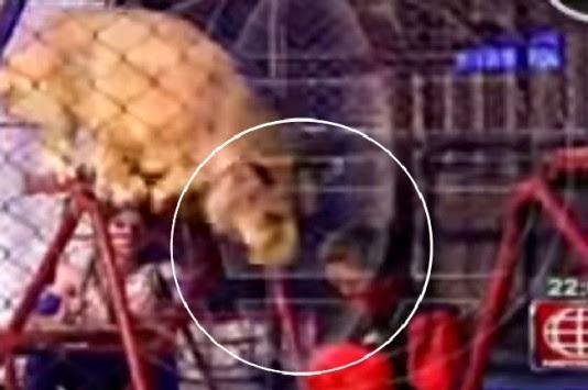 Συγκλονιστικό: Λιοντάρι αρπάζει δασκάλα! (βίντεο)