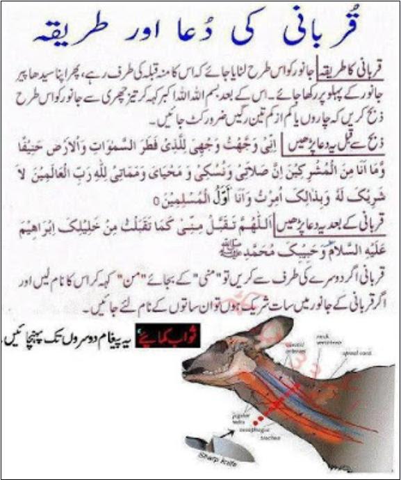 How make Qurbani Bakra Eid Distribution Meat  Biseworld