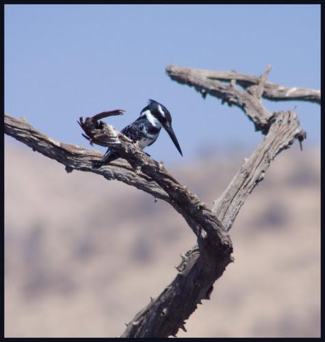 vogel in Zuid-Afrika by hans van egdom