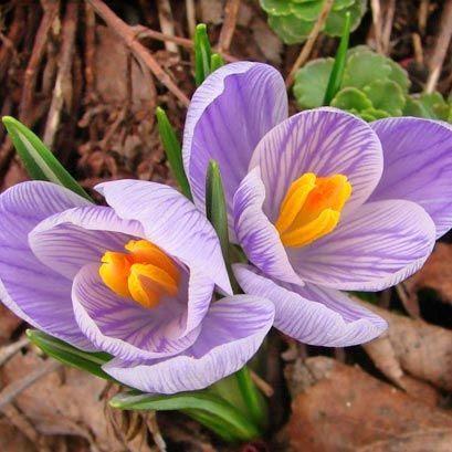 photo grfk_EC_spring_left.jpg