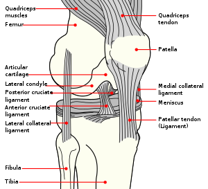 English: Right knee.