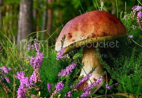 photo 15ExoticMushrooms_zpsb4585077.jpg