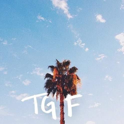 Friday Palm Tree
