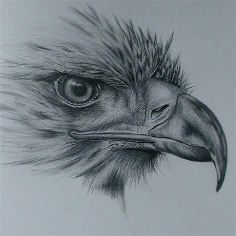 images  eagles  pinterest stand  eagle