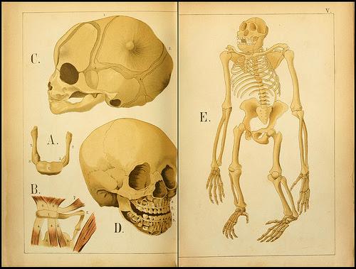 atlas anatomie enfant 12 Atlas anatomique pour écoliers en 1879  information histoire design