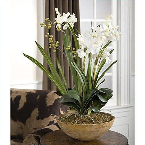 Moth orchids safe for cats and dogs