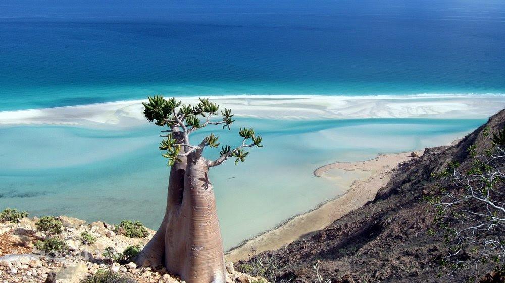 Resultado de imagen para Socotra, Yemen