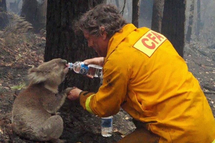 bombeiro-coala