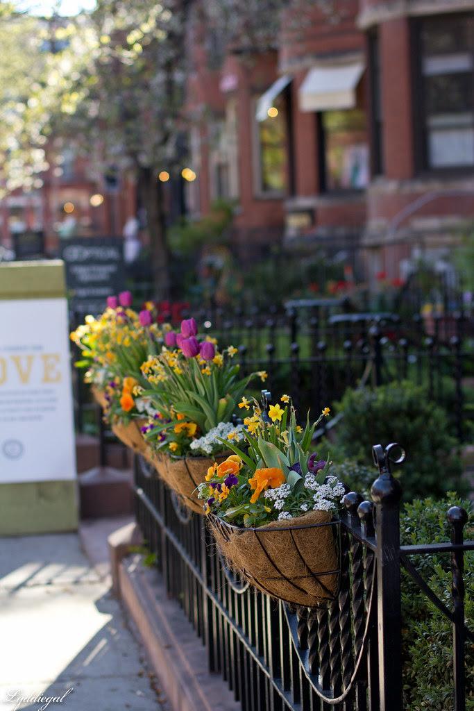 flowers on newbury.jpg