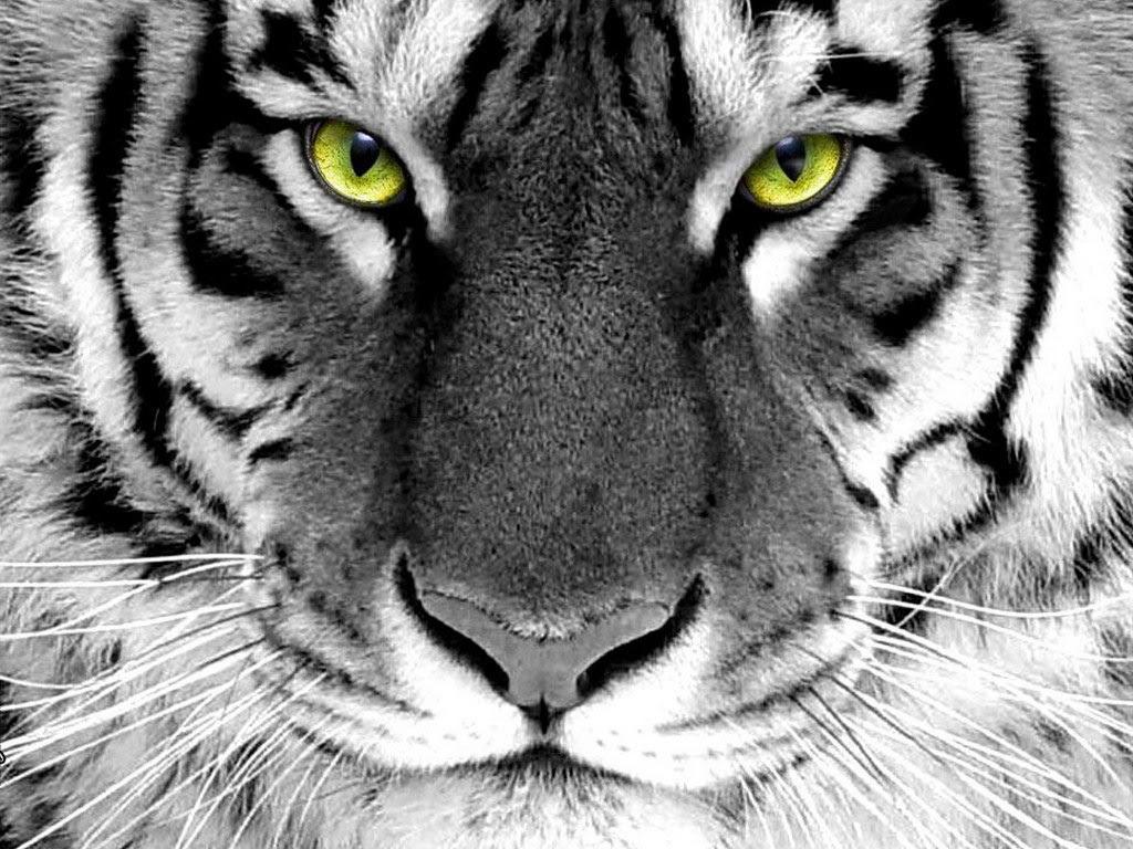 http://24.media.tumblr.com/tumblr_m2hedtkbcD1r41v6jo4_1280.jpg