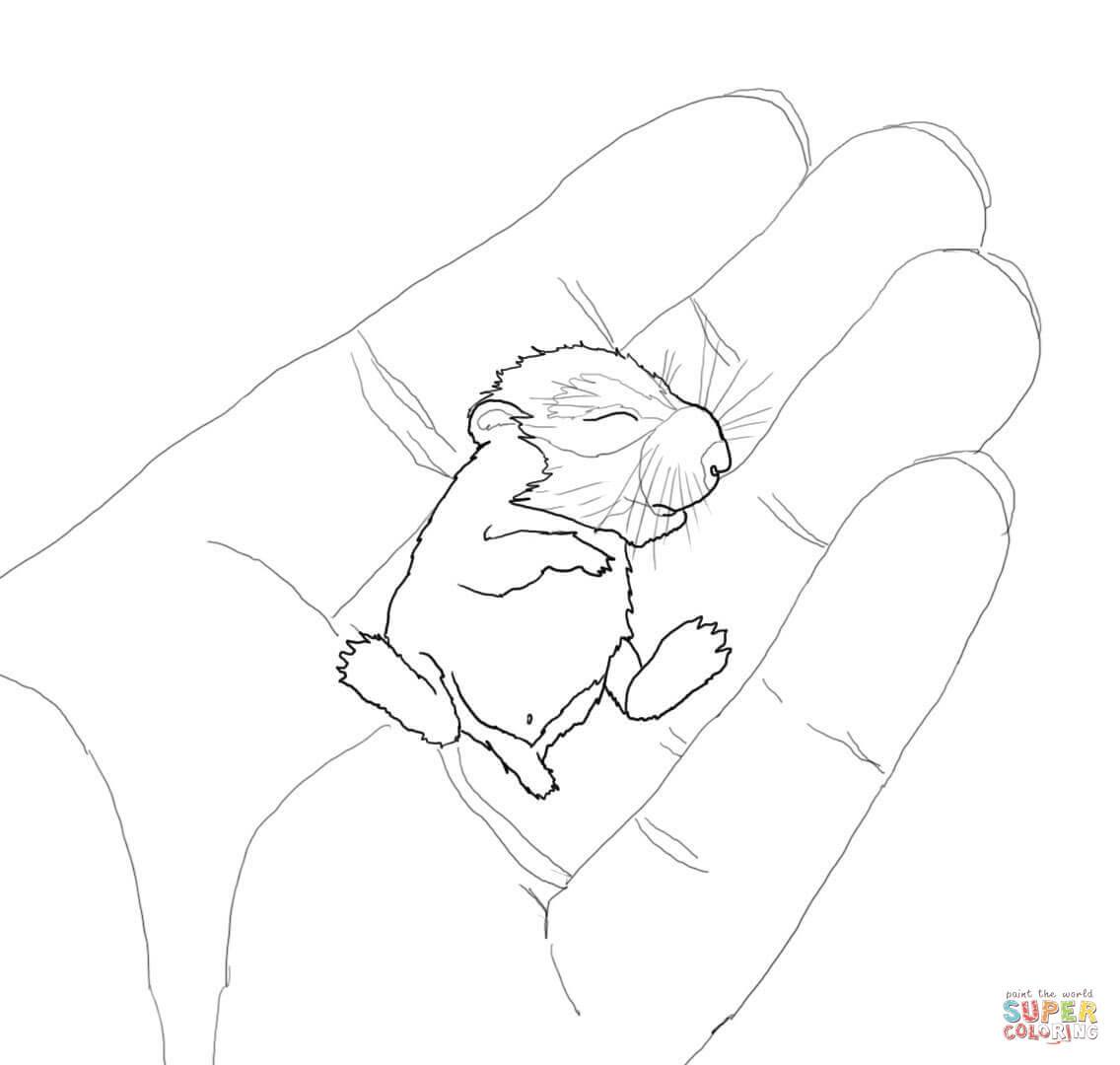 baby hamster in the palm coloring page