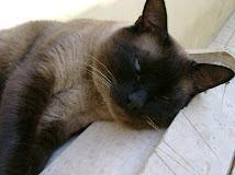 Fígaro, meu gatinho