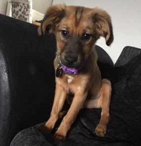 Nora – 4 month old male Cross-Breed