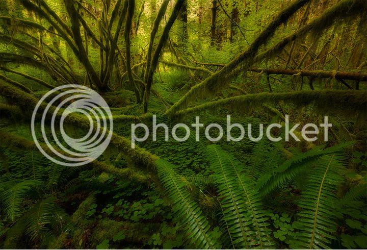 photo Ian-Plant-1_zps5c10ecb7.jpg