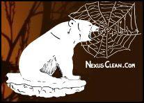 Nexus Clean
