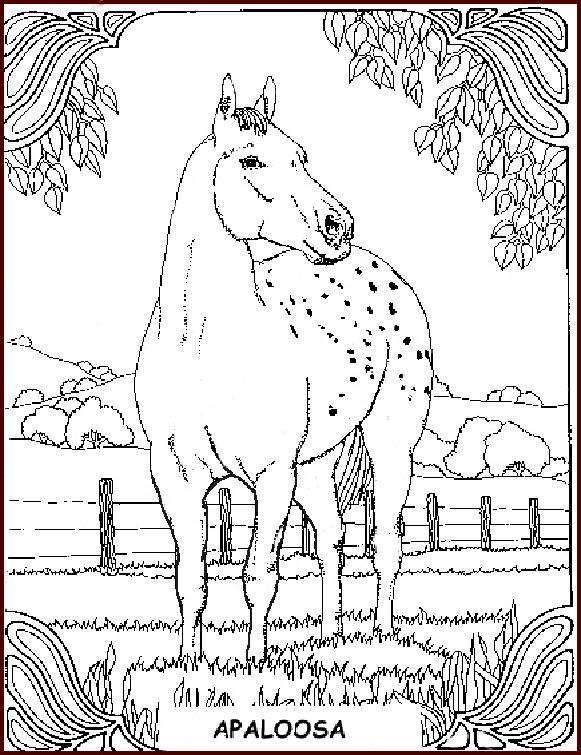 17 elegant ausmalbilder pferde dressur