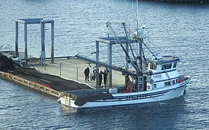 Loading a herring sein on the seiner F/V Andy ...