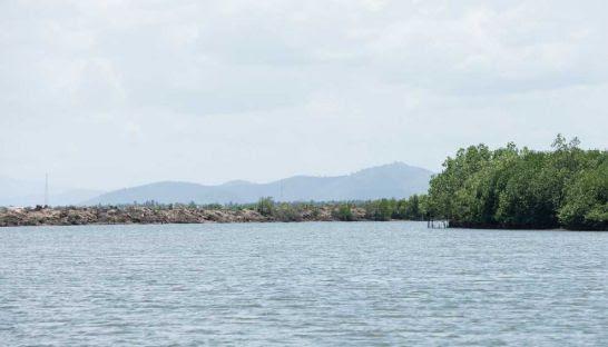 5-mangroves_kampot.jpg?itok=vF6Wm4dd