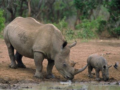La población de vertebrados se ha reducido a la mitad desde 1970.