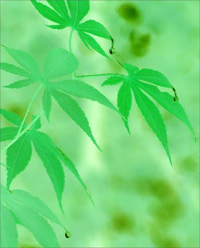 Green -  DSIR0201-g by Bahman Farzad