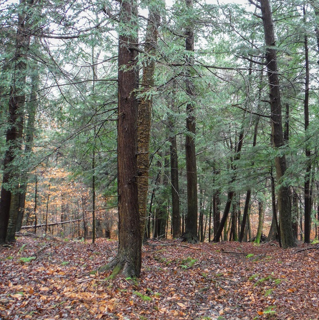 50 acres conserved in Potter County