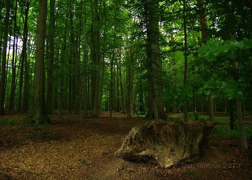 Tervuren Forest