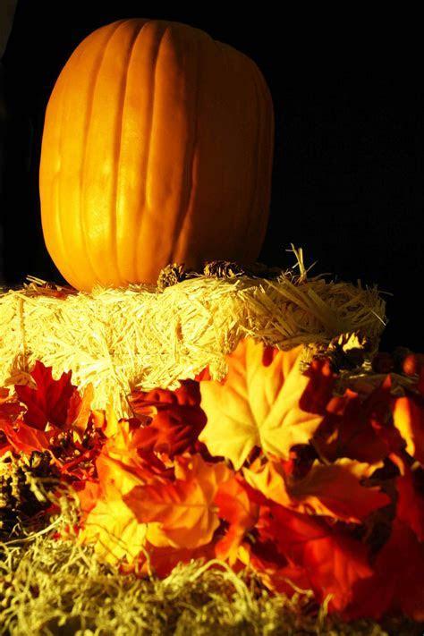 5 Creative Thanksgiving Themes