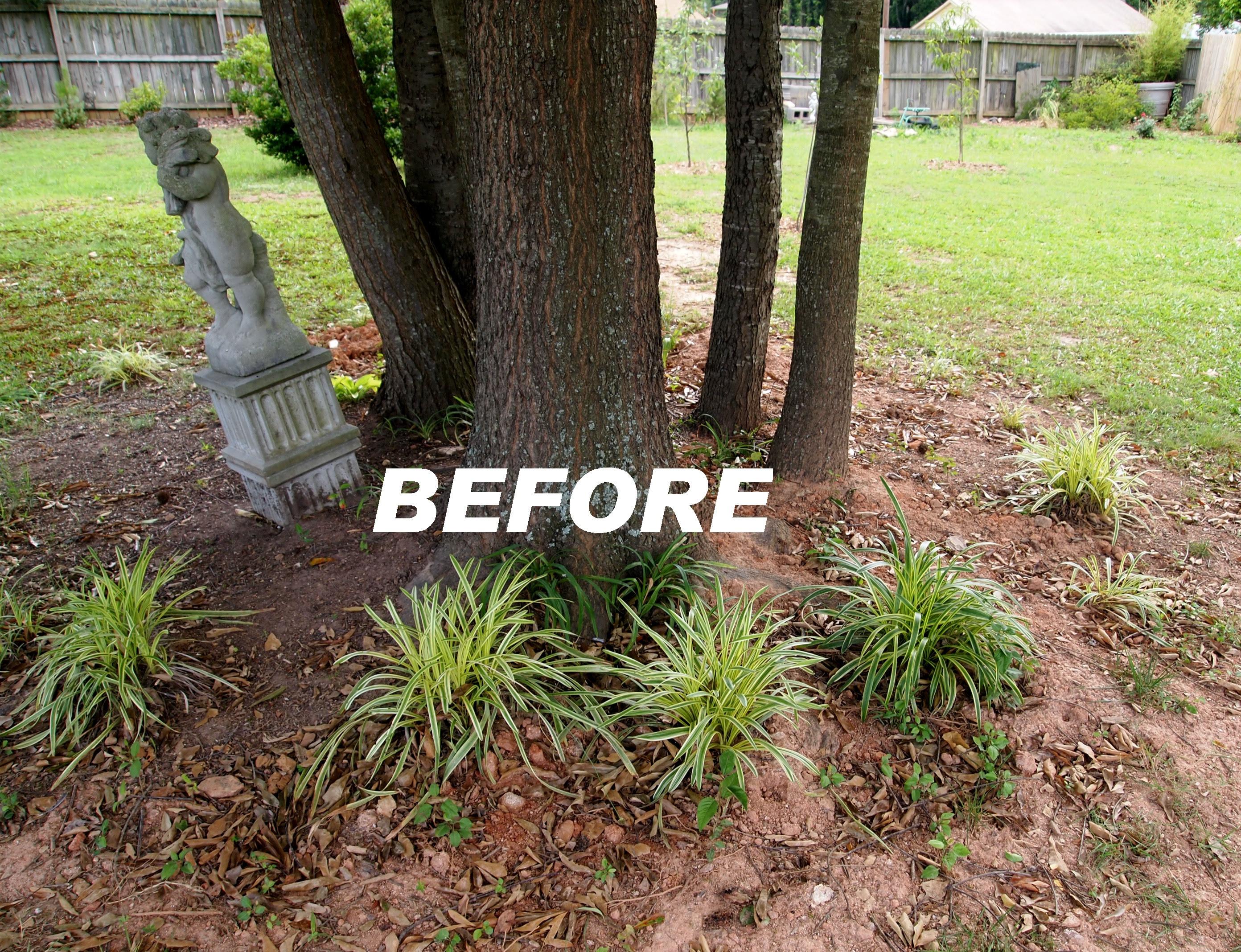Garden Ideas Under Pine Trees Driveway Landscaping Ideas
