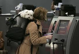 Pet Policies Airlines - Checking in with a pet