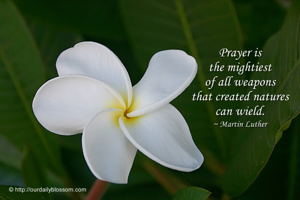 Spiritual Quote Martin Luther Our Daily Blossom