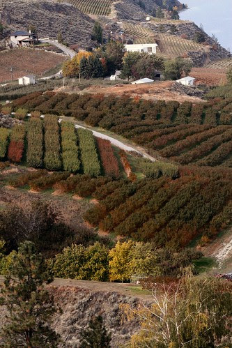 orchard-slopes