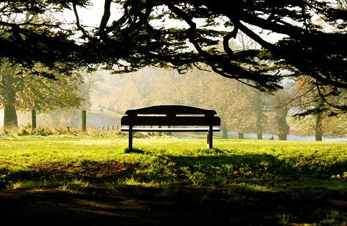 Wollaton Park Bench