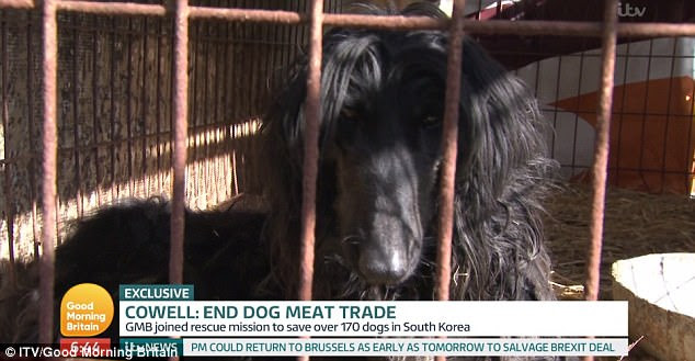 Heartbreaking: According to the HSI, there are approximately 2 million dogs in 17,000 facilities across South Korea that are being exposed to the elements in small, dirty cages
