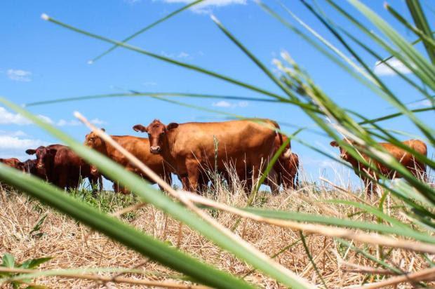 Sobram recursos em linha de crédito para agropecuária sustentável Jerônimo Gozalez/Especial