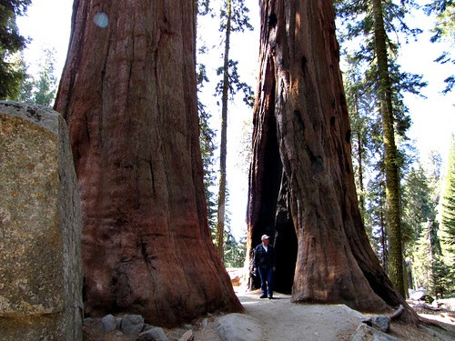 IMG_4016_Sherman_Tree_Trail_Sequoia_NP.JPG